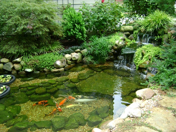 73 backyard and garden pond designs and ideas for Pond shade ideas