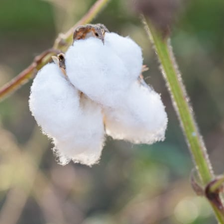 Residues and Waste from Cotton Plants