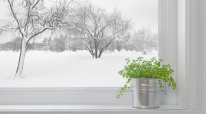 House plant on window sill in winter with snow in the background