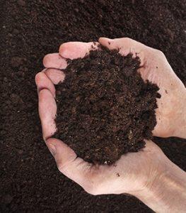 Compost Soil