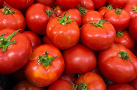Sauce Tomatoes