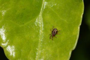 spider-mites