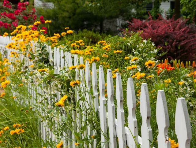 The Best Garden Fencing Options, In My Opinion, Are Those Intertwined With  Long Stems And Plenty Of Blooms. Coreopsis Is Always A Beautiful Choice  With Itu0027s ...