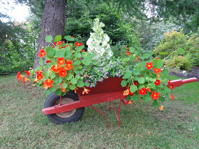 Attractive Botanical Garden Wheelbarrow