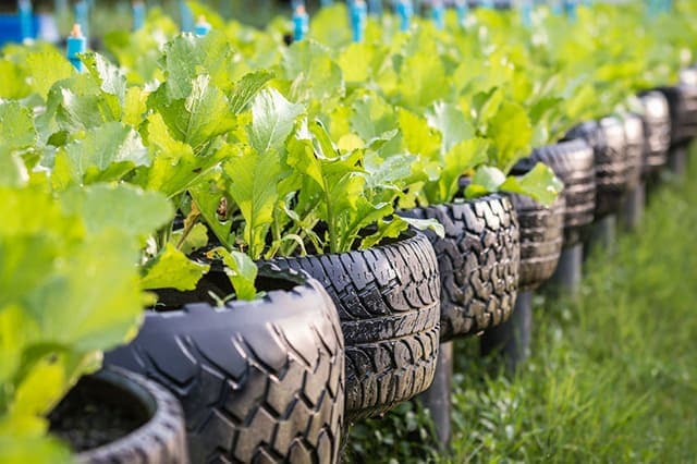 Tire-Vegetable-Garden