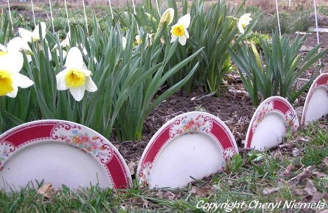 China plate garden border