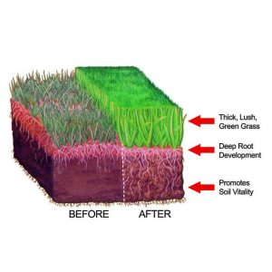 Best Lawn Fertilizer >> Best Lawn Fertilizer Reviews 2019