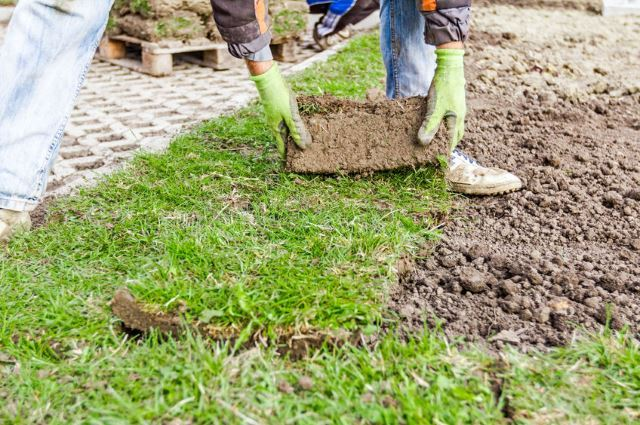 How to Repair Lawn Fertilizer Burn