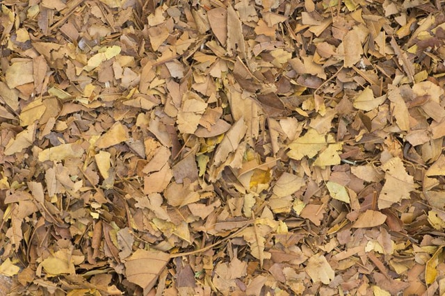 What Is Mulch Everything You Need To Know About Mulch