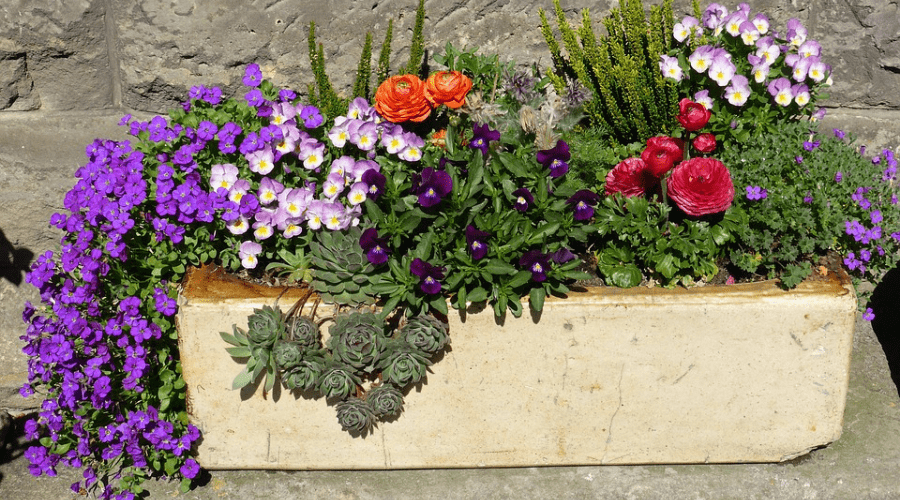 Featured Image - ADDING INTEREST WITH THESE FABULOUS GARDEN BOX IDEAS