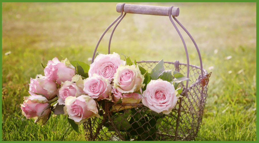 Featured Image - EVERYONE CAN ENJOY ROSES NO MATTER WHERE YOU GARDEN