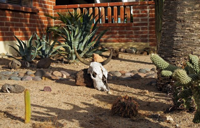 Add In Some Eclectic Pottery, Rock Formations, And A Skull (or Similar  Find) To Your Xeriscaping To Create An Artistic, And Interesting Appeal.