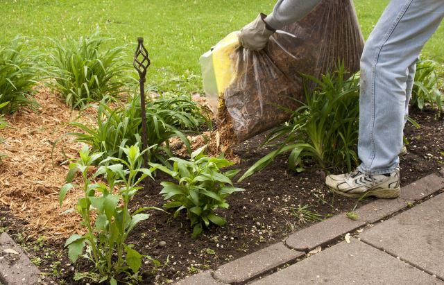 Mulching Plants