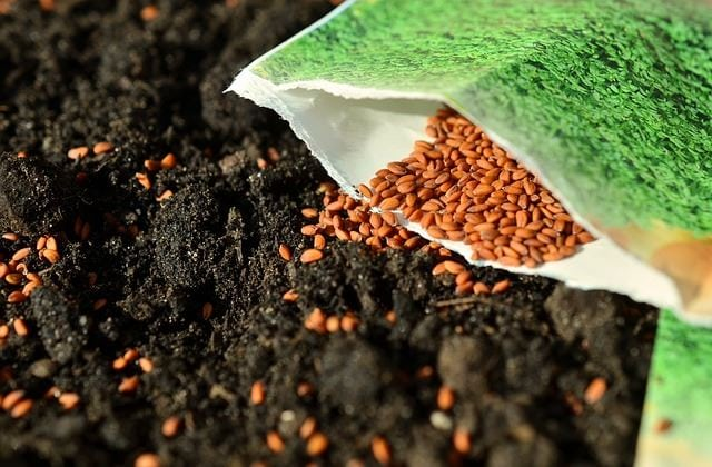 Seed Sowing