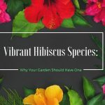 Vibrant Hibiscus Species: Why Your Garden Should Have One