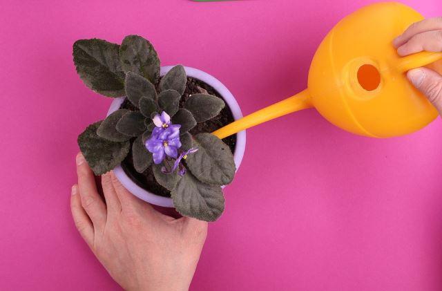 Plant Cares