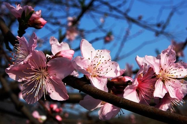 49 of the best winter plant ideas 27 is perfect the plum blossom is a tree that grows gorgeous flowers that bloom near winter time although most of the blooms will fall off the tree once full blown mightylinksfo