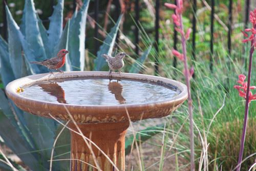 Rustic Bird bath