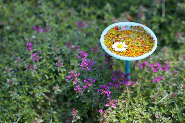 Fairy Garden Delight