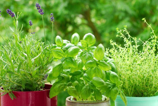Herb Garden Backyard