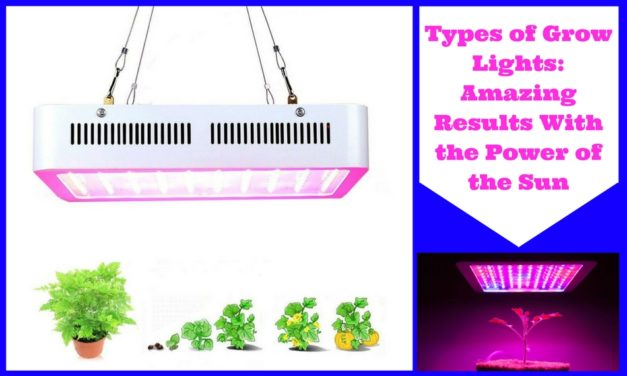 Types of Grow Lights: Amazing Results With the Power of the Sun