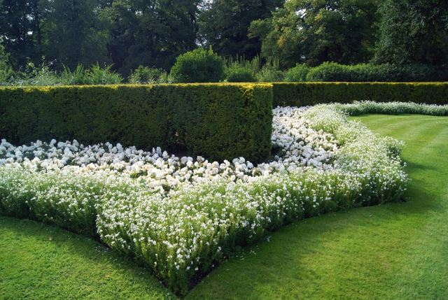 Unique Hedge Design