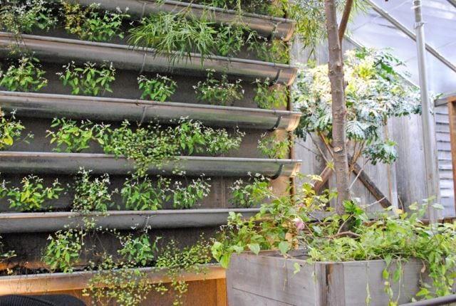 Rain Gutter Vertical Wall Garden