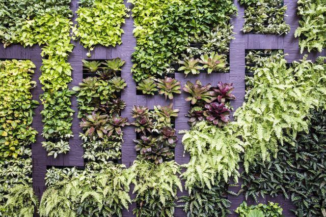 Wall Maze