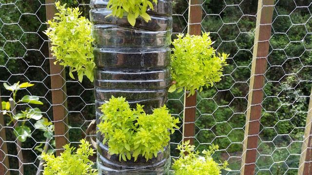 Water Reservoir Planter