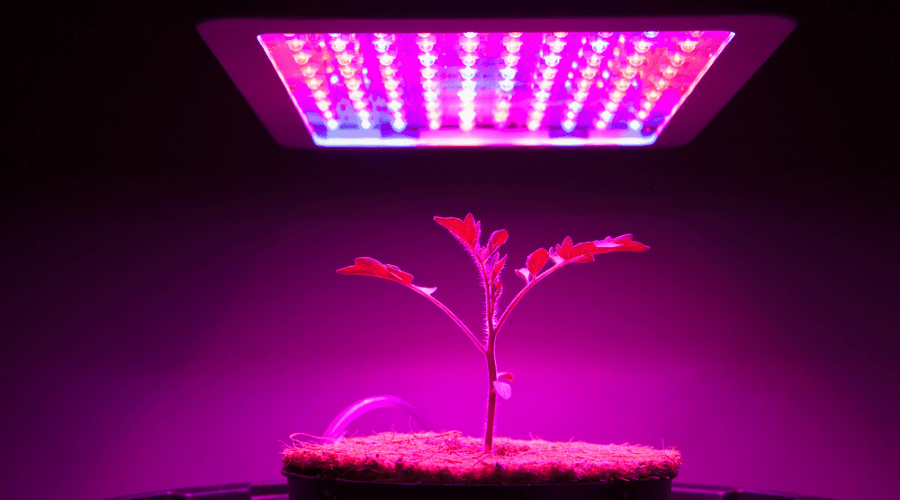 Featured Image - HOW TO USE A GROW LIGHT TO HELP YOUR PLANTS GROW