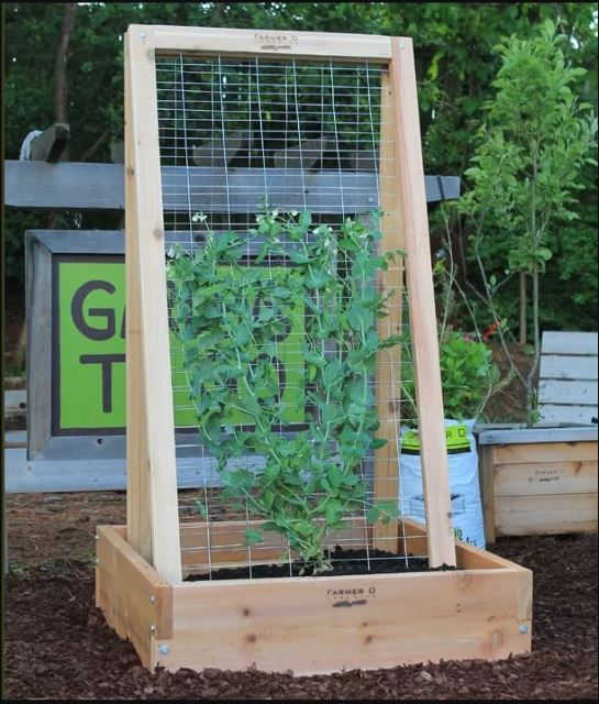 41 Best DIY Garden Trellis Ideas: #27 is Awesome! Contemporary Garden Wood Trellis Designs on wood trellis patterns, wood trellis kits, wood bed frames designs, custom wood trellis designs, wood stacking designs, wood outdoor furniture designs, wood arbor plans, wood garden art, wood for trellis, wood screws designs, wood garden gates, wood trellis designs ideas, wood trellis overhead, wood trellis design plans, wood garden wall trellis, wood trellis details, wood smokehouse designs, wood garden trellis plans, wood trellis fence plans, wood rose trellis,
