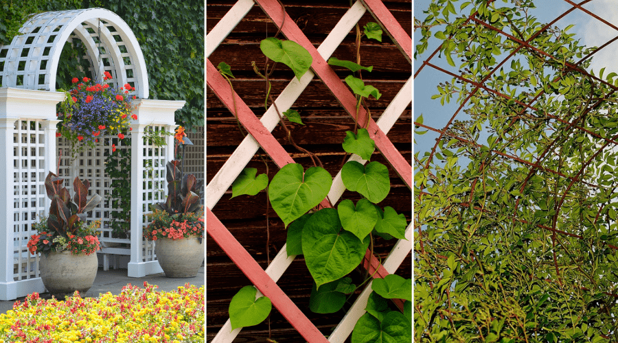 Featured Image -GARDEN TRELLIS IDEAS