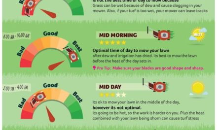 Best Time to Mow Your Lawn