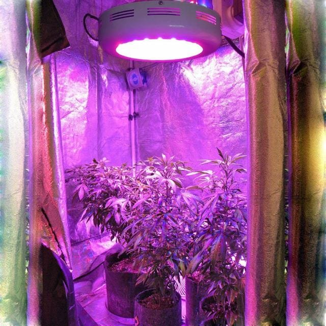 Best Ufo Led Grow Light Reviews 2019