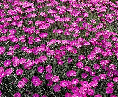 Powerful Perennials