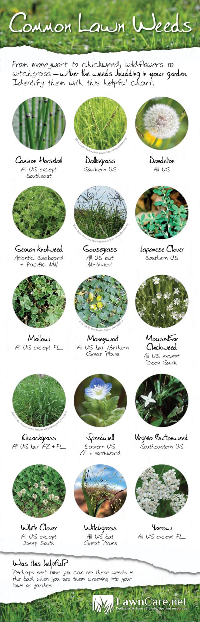 A Visual of Common Lawn Weeds