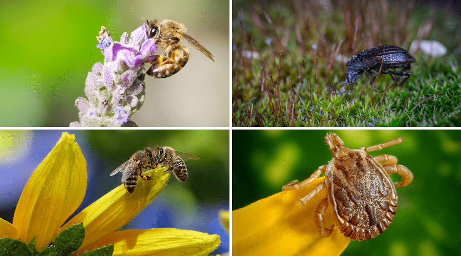Featured Image - BENEFICIAL INSECTS AND HOW THEY SUPPORT YOUR GARDEN