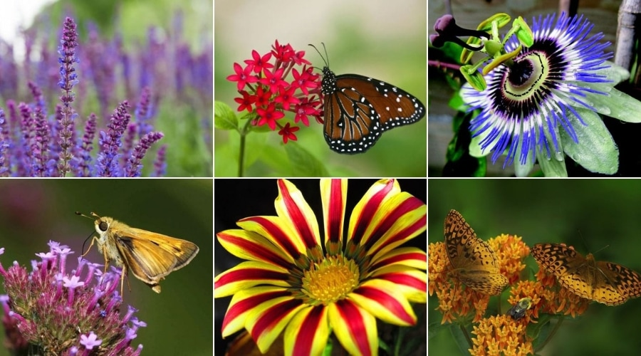 Featured Image - MUST-HAVE PLANTS TO MAKE AN AMAZING BUTTERFLY GARDEN