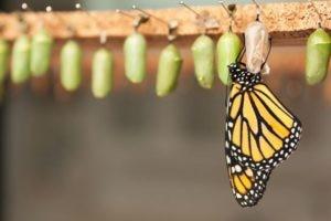 Newborn Butterfly