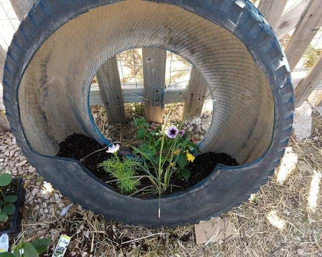 Step 8: Plant Your Tire