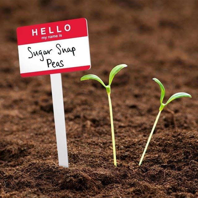 Hello Garden Tags