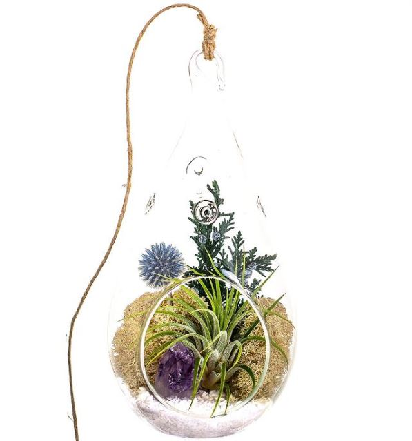 Air Terrariums