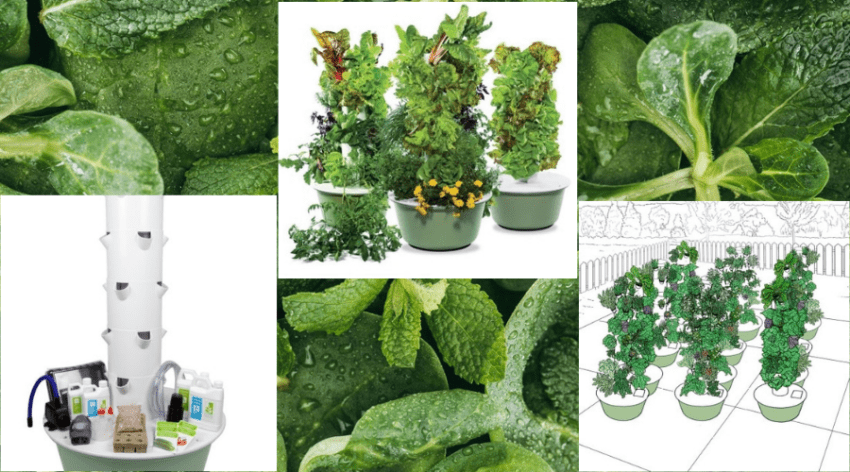 Featured Image - THE BEST TOWER GARDEN REVIEWS_ A CLOSER LOOK