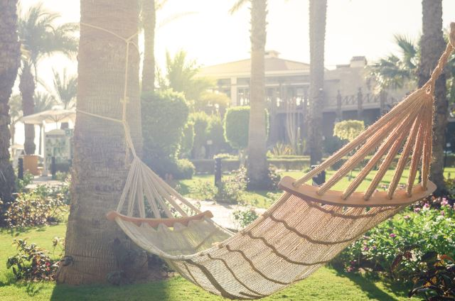 Hammock between the Palms
