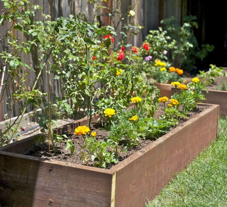 Raised Box Beds