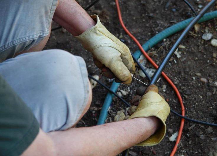 A man works on his DIY project of installing his own irrigation emitter system.