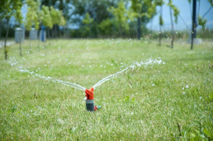 Sprinkler watering the green grass. Sunny summer day