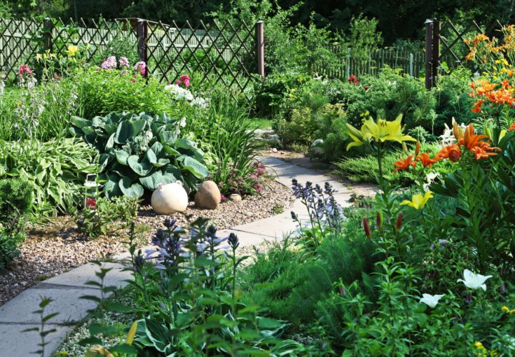 A colorful backyard garden in full bloom during the summer