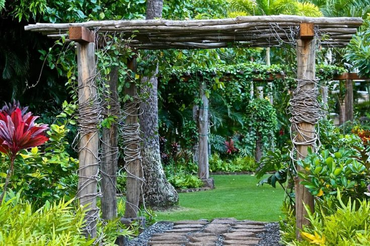 Climbing plant wood structure in the garden and serves as a path walk