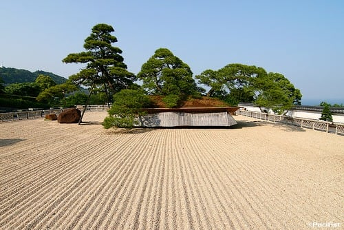 10 Pics Of The Oldest Bonsai Tree